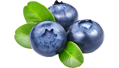 Blueberries PNG Pic