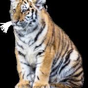 Mammal PNG HD Image