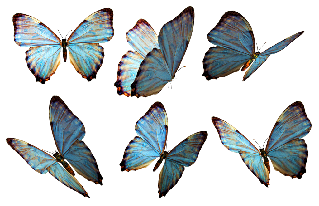 Butterfly PNG 2