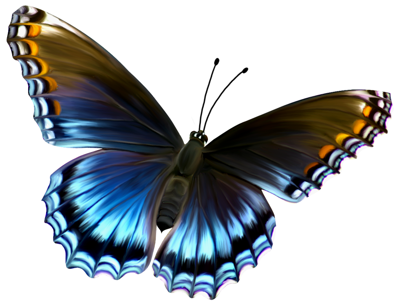Butterfly PNG 6