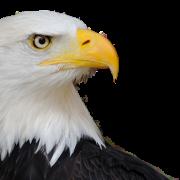 Eagle PNG 5
