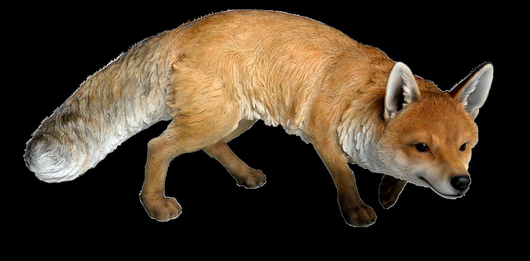 Fox PNG 11