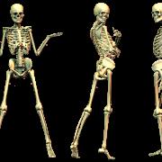Skeleton PNG File