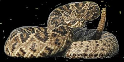 Rattlesnake PNG Image