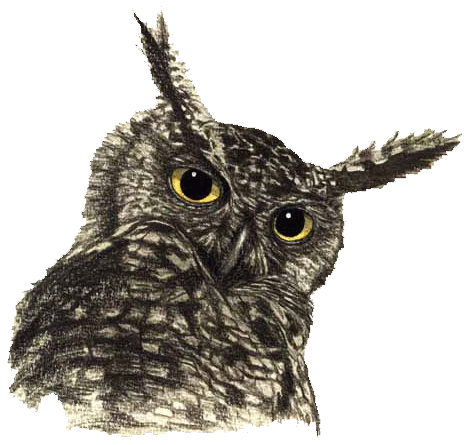 Owl PNG File