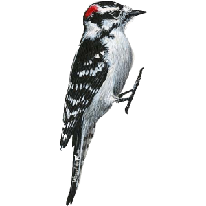 Woodpecker PNG Clipart