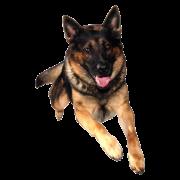 German Shepherd Dog PNG