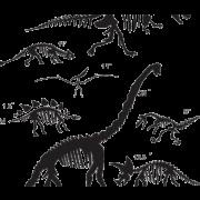 Dinosaur Bones Fossils