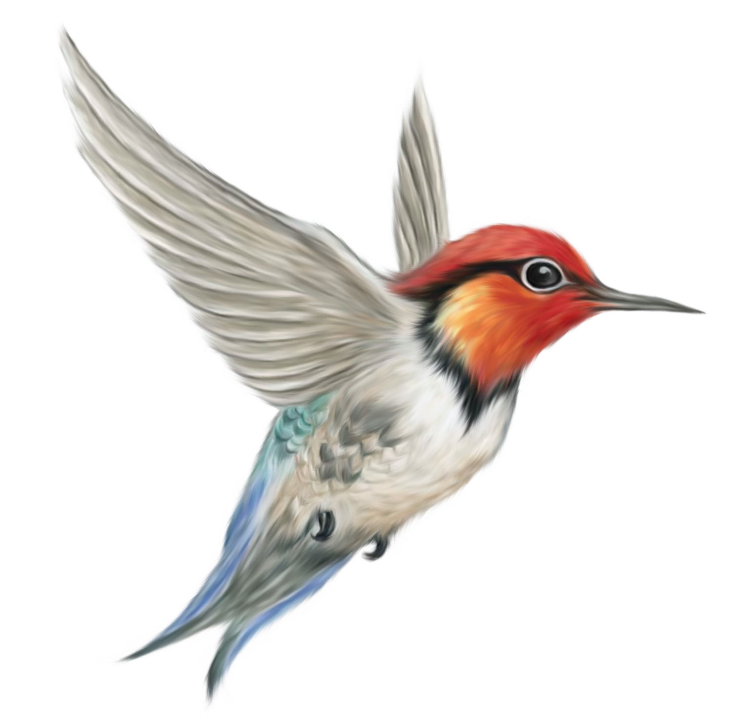 Kingfisher PNG File