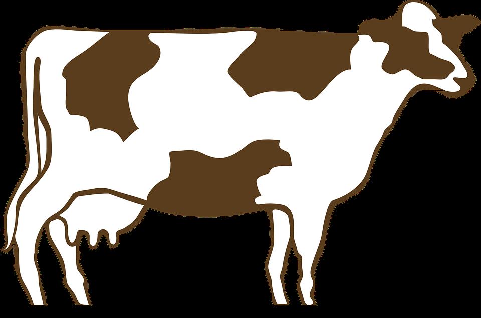 Vector Cattle Transparent