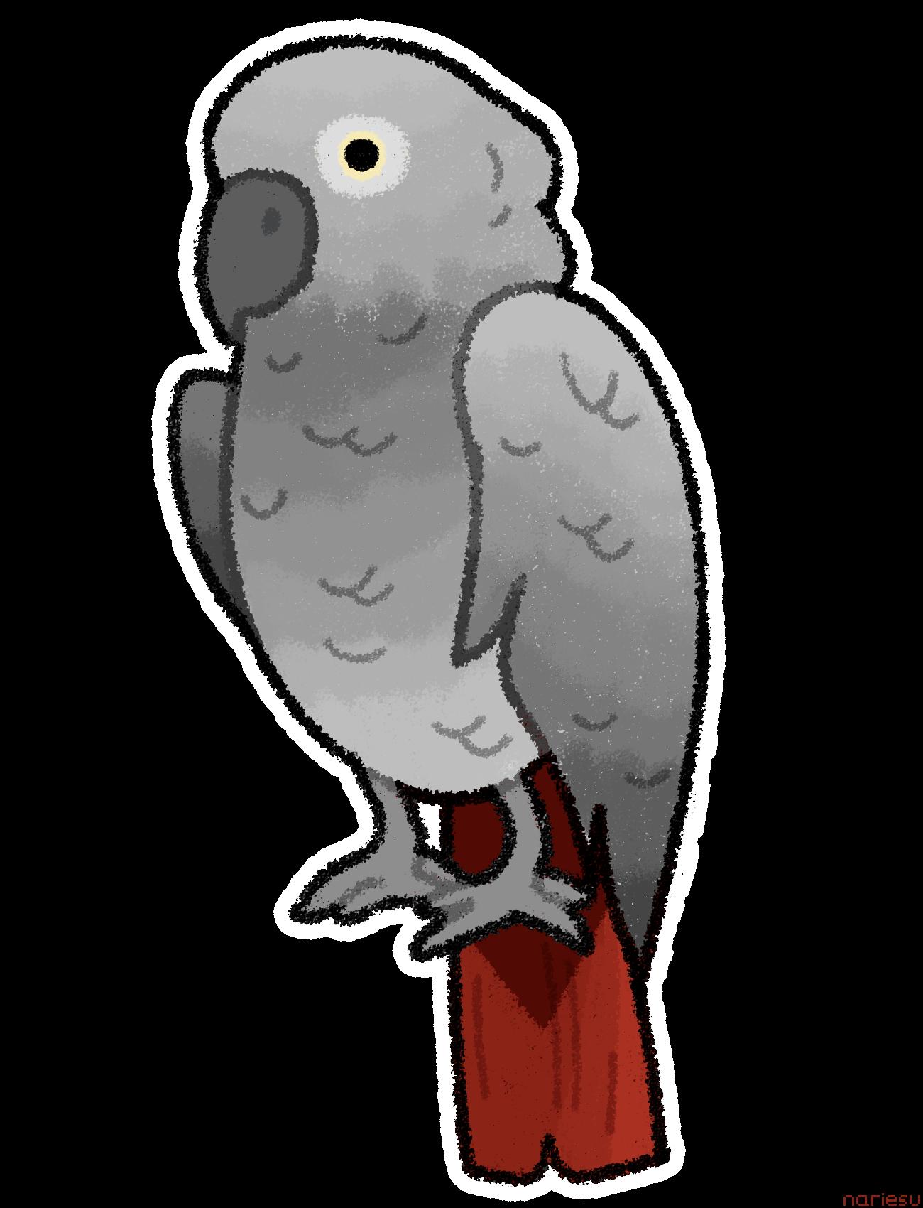 Vector Grey Parrot Transparent
