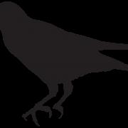 Sitting Rook Bird PNG Pic